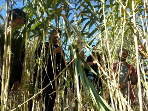 seminario sant celoni reeds